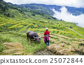 field, agriculture, mountain 25072844