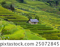 field, agriculture, mountain 25072845