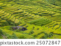 field, agriculture, mountain 25072847