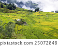 field, agriculture, mountain 25072849