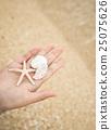 seashell, shell, beach 25075626
