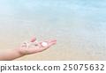 seashell, shell, beach 25075632