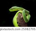 蛇 爬行動物 爬蟲類 25082705