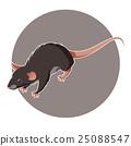 老鼠 矢量 矢量图 25088547