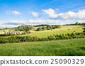 New Zealand peaceful farmland and grazing cows 25090329
