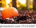 pumpkin, fallen, leaves 25101687