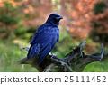 Black bird raven sitting on the tree trunk 25111452