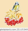 Titmouse bird and ashberry 25115340