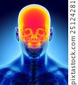 颅骨 头骨 解剖学 25124281