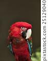 animal, animals, avian 25129040