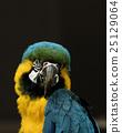 animal, animals, avian 25129064