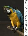 animal, animals, avian 25129066