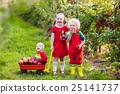 Kids picking apples in fruit garden 25141737