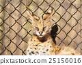 สัตว์,ภาพวาดมือ สัตว์,หน้าเสีย 25156016