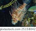 Underwater 25158042