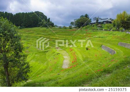 Oyama Chita, Kamogawa City, Chiba Prefecture 25159375