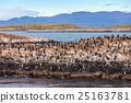 Bird Island near Ushuaia 25163781