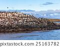 Bird Island near Ushuaia 25163782