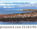 Bird Island near Ushuaia 25163785