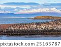 Bird Island near Ushuaia 25163787