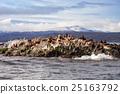 Seal Island near Ushuaia 25163792