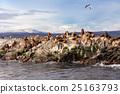 Seal Island near Ushuaia 25163793