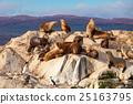 Seal Island near Ushuaia 25163795