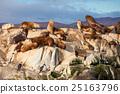 Seal Island near Ushuaia 25163796