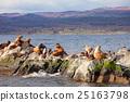 Seal Island near Ushuaia 25163798