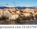 Seal Island near Ushuaia 25163799