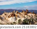 Seal Island near Ushuaia 25163802
