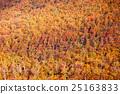 Golden autumn forest background 25163833