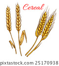 wheat, rye, icon 25170938