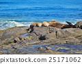 La Jolla, San Diego, California 25171062