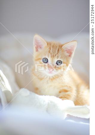 아기 고양이, 새끼 고양이, 고양이 25172944