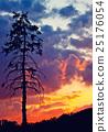 Pine tree at sunset 25176054