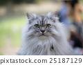 毛孩 貓 貓咪 25187129