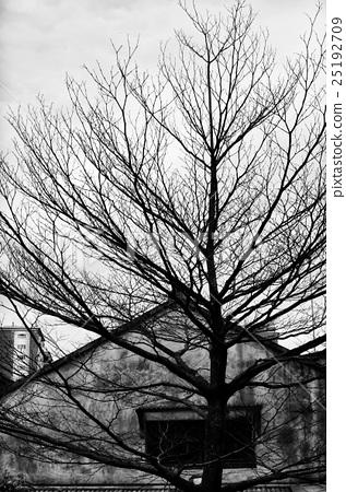 Black and white image of a house and a tree in fro 25192709