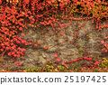 wall, red, plant 25197425
