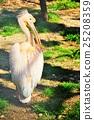 นกกระทุง,นก,สัตว์ 25208359