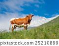 cow grazes in green meadow 25210899