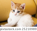 Young cat 25210989