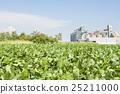 Soybean field 25211000