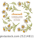 chamomile vector set 25214811