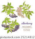 elderberry, herb, flower 25214812
