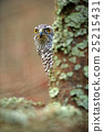 Hidden head portrait of goshawk. Detail of bird 25215431