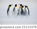 Group of penguin. Group of six King penguins 25215476