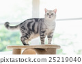 animal, cat, kitten 25219040