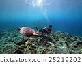 綠海龜 海龜 海底的 25219202
