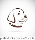 Vector image of an Labrador dog's head. 25219832